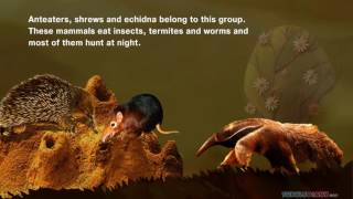 Insect Eating Mammals | Science Video for Kids