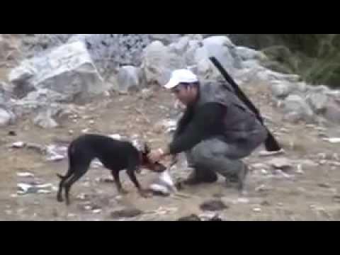 Caccia alla lepre ΚΥΝΗΓΙ ΛΑΓΟΥ FINTANIS SERRES hare hunting 2008 023