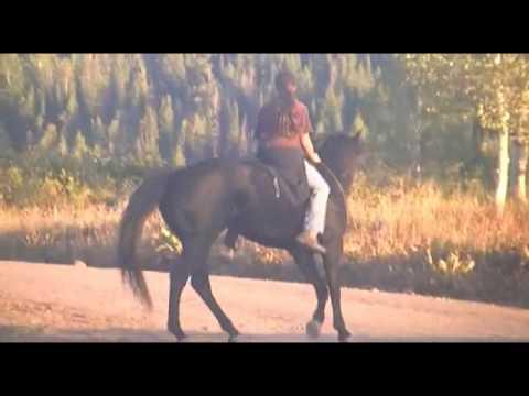 Xxx Mp4 My Wonderful Horse LADY 3gp Sex