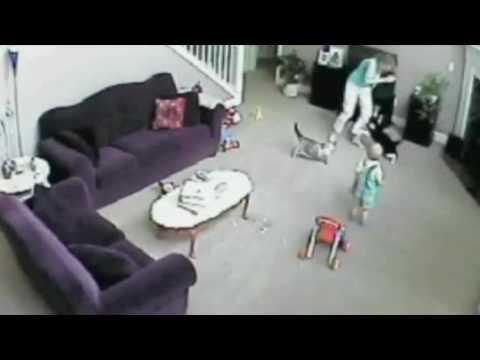 Xxx Mp4 Gato Defiende A Bebé De Niñera 3gp Sex