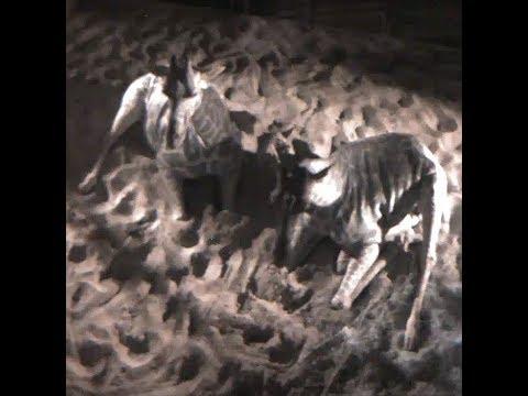 Xxx Mp4 Cheyenne Mountain Zoo Giraffe Birth Cam 3gp Sex
