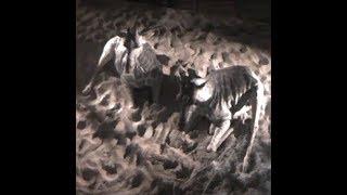Cheyenne Mountain Zoo Giraffe 'Birth Cam'