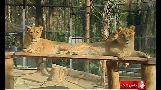 Iran Treatment Wild animals in Zoo, Tehran province نگهداري از حيوانات باغ وحش تهران ايران
