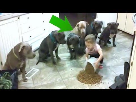 Xxx Mp4 4 Year Old Little Girl Feeding And Controlling 6 Pitbulls 3gp Sex