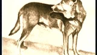 The German Shepherd - Pet Dog Documentary English