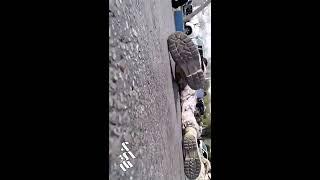 Serangan Teroris Saat Parade Militer di Iran, Ahvaz. 8 Meninggal 20 Terluka - 09/22/2018