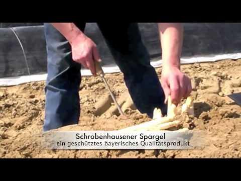 Spargel aus Schrobenhausen Mitte April 2016 startet die Spargelsaion