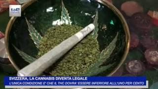 SVIZZERA, LA CANNABIS DIVENTA LEGALE