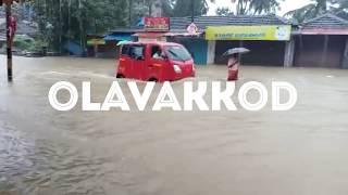 Palakkad flood|palakkad heavyvrain ||പാലക്കാട് വെള്ളപ്പൊക്കം|പാലക്കാട് ശക്തമായ മഴ 9-8-2018 palakkad