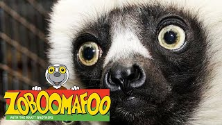 🐒 Zoboomafoo 🐒 Season 1 Episode 1-5 Compilation | Kids TV Shows