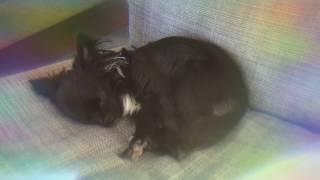 sleepy ʚ♡⃛ɞ pipi