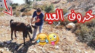 #اسلام العشي - خروف العيد