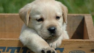 Funny And Cute Puppy Videos Compilation 2016