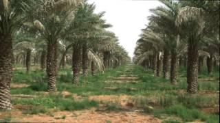 مزرعة الراجحي بمنطقة القصيم  أكبر وقف خيري على كوكب الارض