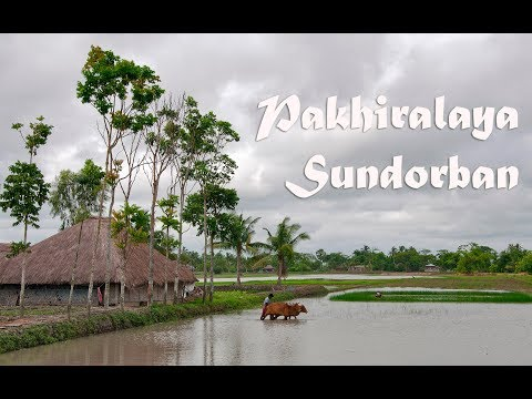 Xxx Mp4 Pakhiralaya পাখিরালয় A Little Village At Sundarbon সুন্দরবন 3gp Sex