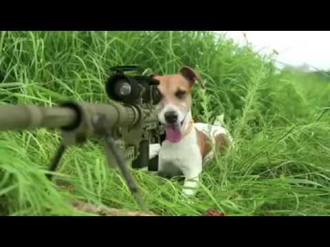 Funny dog shooting a squirrel