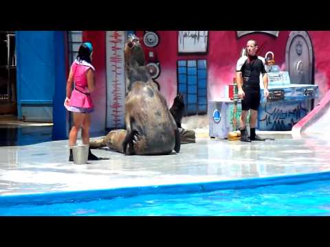 HD Mundo Marino San Clemente del Tuyu Show de lobos focas 3 3 HD