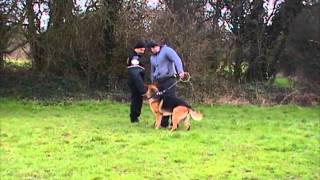 Guard Dog Security - Street Patrol- Dog Training