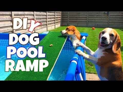 Xxx Mp4 DIY SWIMMING POOL DOG RAMP BEAGLE POOL PAWTY 3 3gp Sex