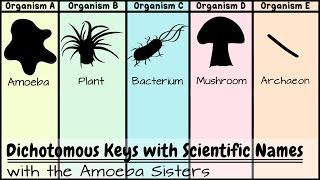 Dichotomous Keys: Identification Achievement Unlocked