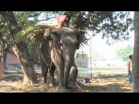 Elephant Fair Sonpur p 2