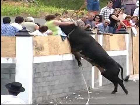 Most Awesome BullFighting Festival - Top funny video