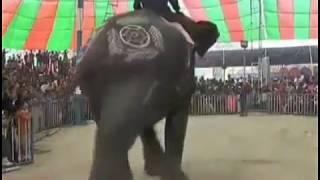 ব্যতিক্রম ধর্মী এক সার্কাস দিনাজপুরের চেরাডাঙ্গী মেলায়