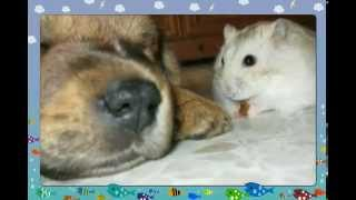 My Dog Lassie gal video