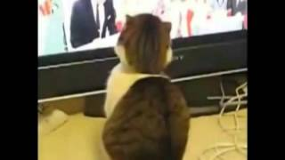 Funny Cats In Slow Motion Try not to laugh!