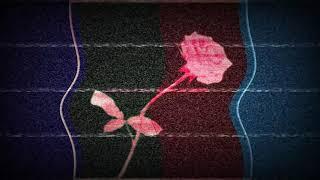 ROSE CLOSE EYES