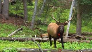 Clayton Coyle shoots elk in the chest!