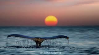 musique de relaxation chant des baleines