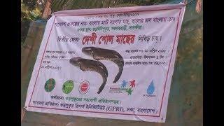 শোল মাছ বদলে দিল জাকিরের ভাগ্য, Zakir's fate changed the soy fish