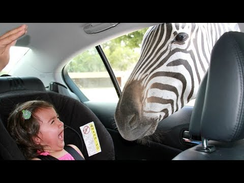 Forget CATS and DOGS Hilarious KIDS vs ZOO ANIMALS are SO FUNNIER You ll DIE LAUGHING