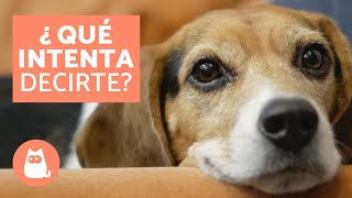 10 cosas que tu perro intenta decirte