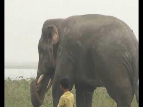 Xxx Mp4 मदमस्त हाथी ने ली दो की जान 3gp Sex