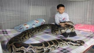 طفل ينقذ ثعبان من الموت... شاهد رد فعل الثعبان بعد 9 سنوات !!