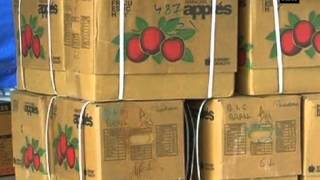 Apples fetch good prices for growers in Himachal Pradesh