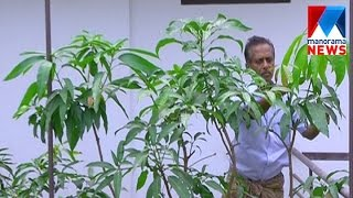 Agriculture revolution at terrace by Francis   | Manorama News