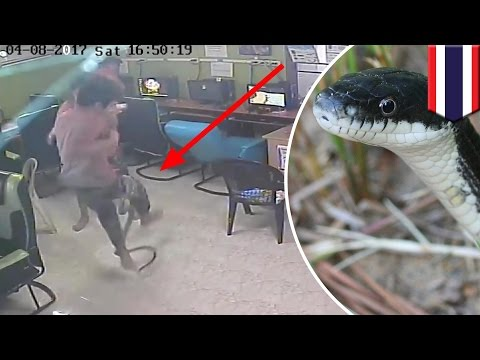 Snake attack internet cafe patrons surprised by snake all hell breaks loose TomoNews