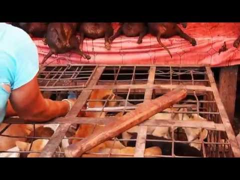 Dog being clubbed to death for dog meat (Indonesia, Sulawesi, Tomohon)