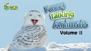 Funny Talking Animals: Episode 2