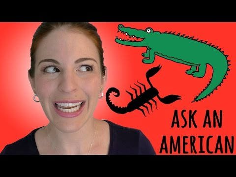 watch Ask An American: 12 DANGEROUS ANIMALS in USA