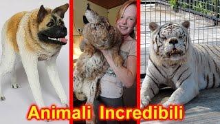 10 ANIMALI FANTASTICI che non crederai Esistono Realmente