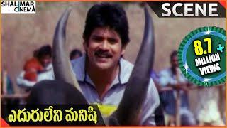 Eduruleni Manishi  Movie    Nagarjuna Fight With Bull     Nagarjuna, Soundarya, Shenaz