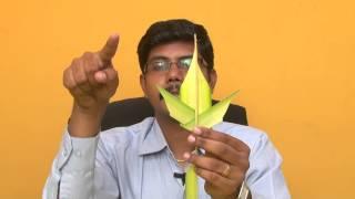 Nature toys using coconut leaf