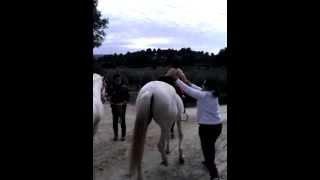 MUNA HORSE CLIMBING.