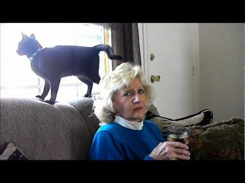 When Cats Attack! (Poor Aunt Kay)