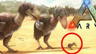 Ark Survival Evolved - PLAY AS DINO, HATCHING TERROR BIRD FAMILY (Ark Scorched Earth Gameplay)