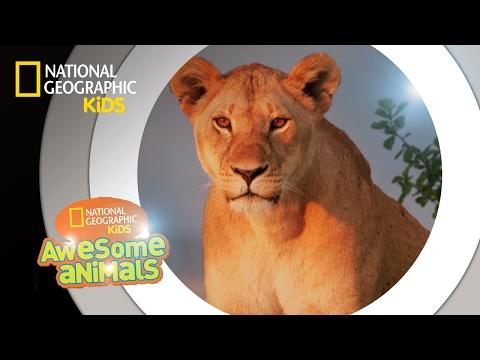 Xxx Mp4 Super Pride Awesome Animals 3gp Sex
